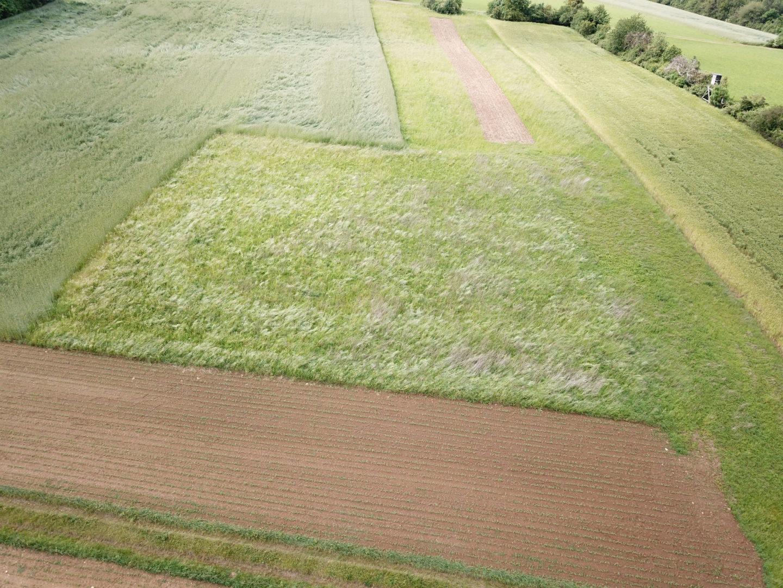 Umwandlung intensiv genutztes Grünland zu Extensiv-Grünland
